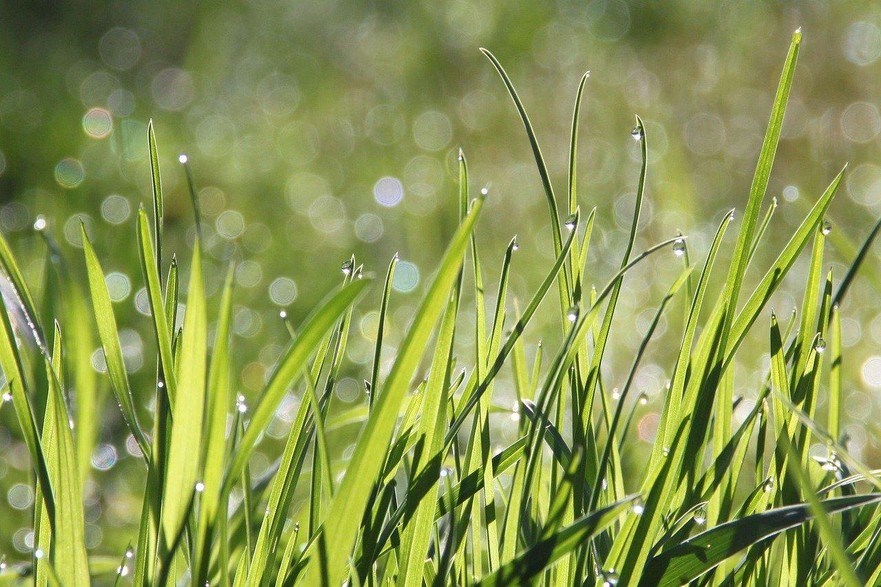 Graspollenallergie