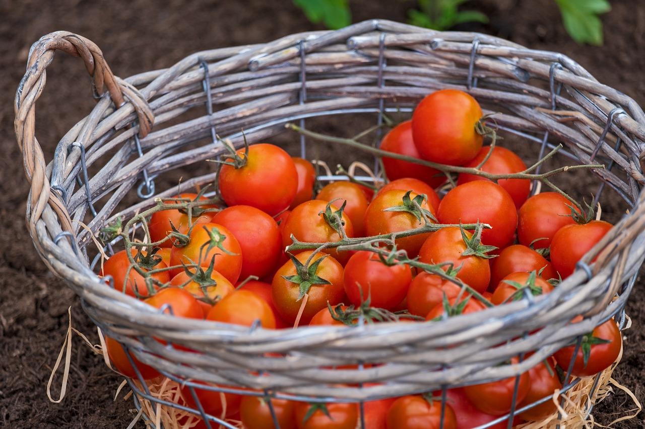 Tomatenallergie